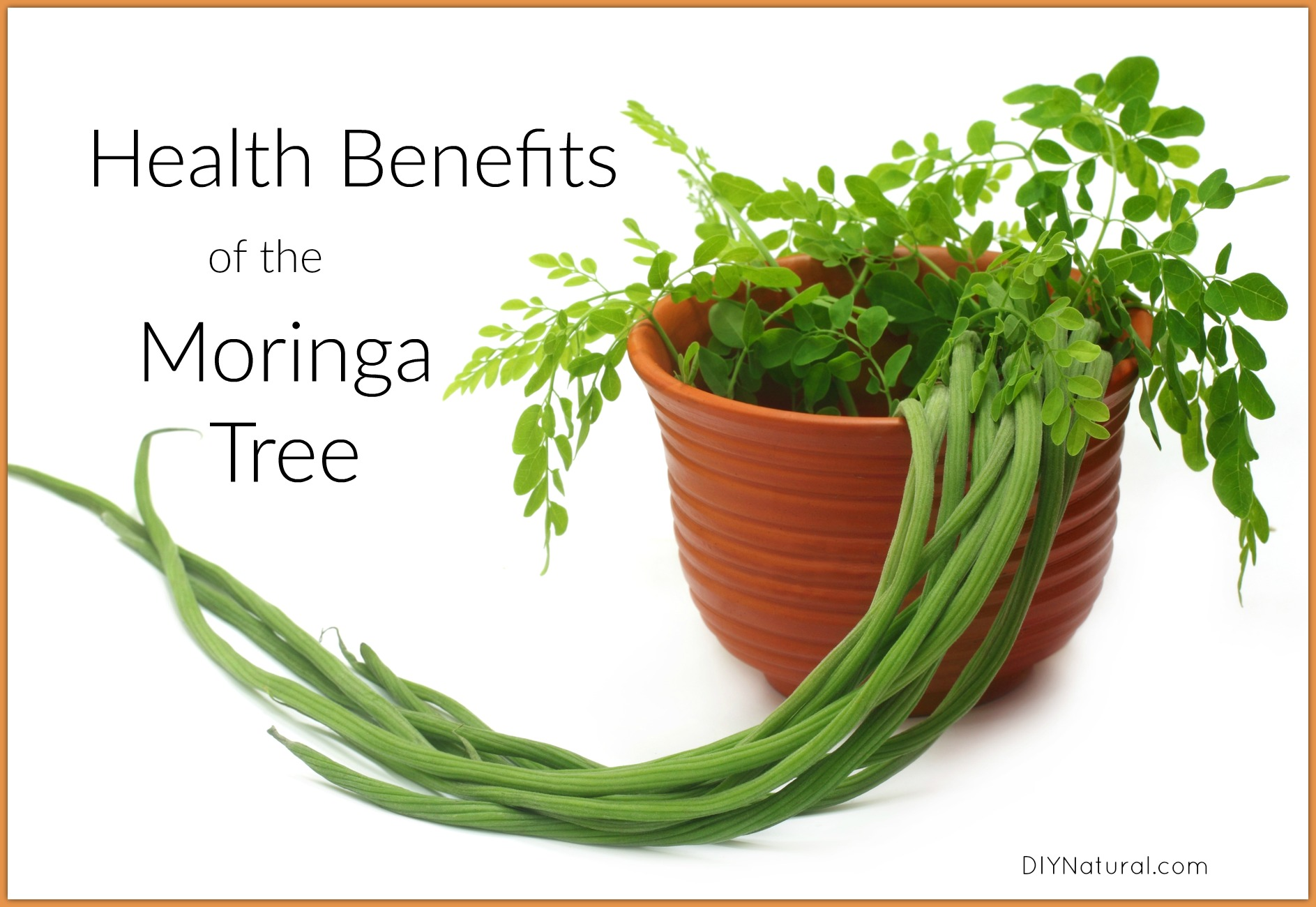Health Benefits of Moringa and Ways to Use the Tree