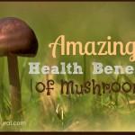 16 Healthy Reasons to Enjoy Eating Mushrooms