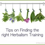 Tips for Finding the Right Herbalist School for You