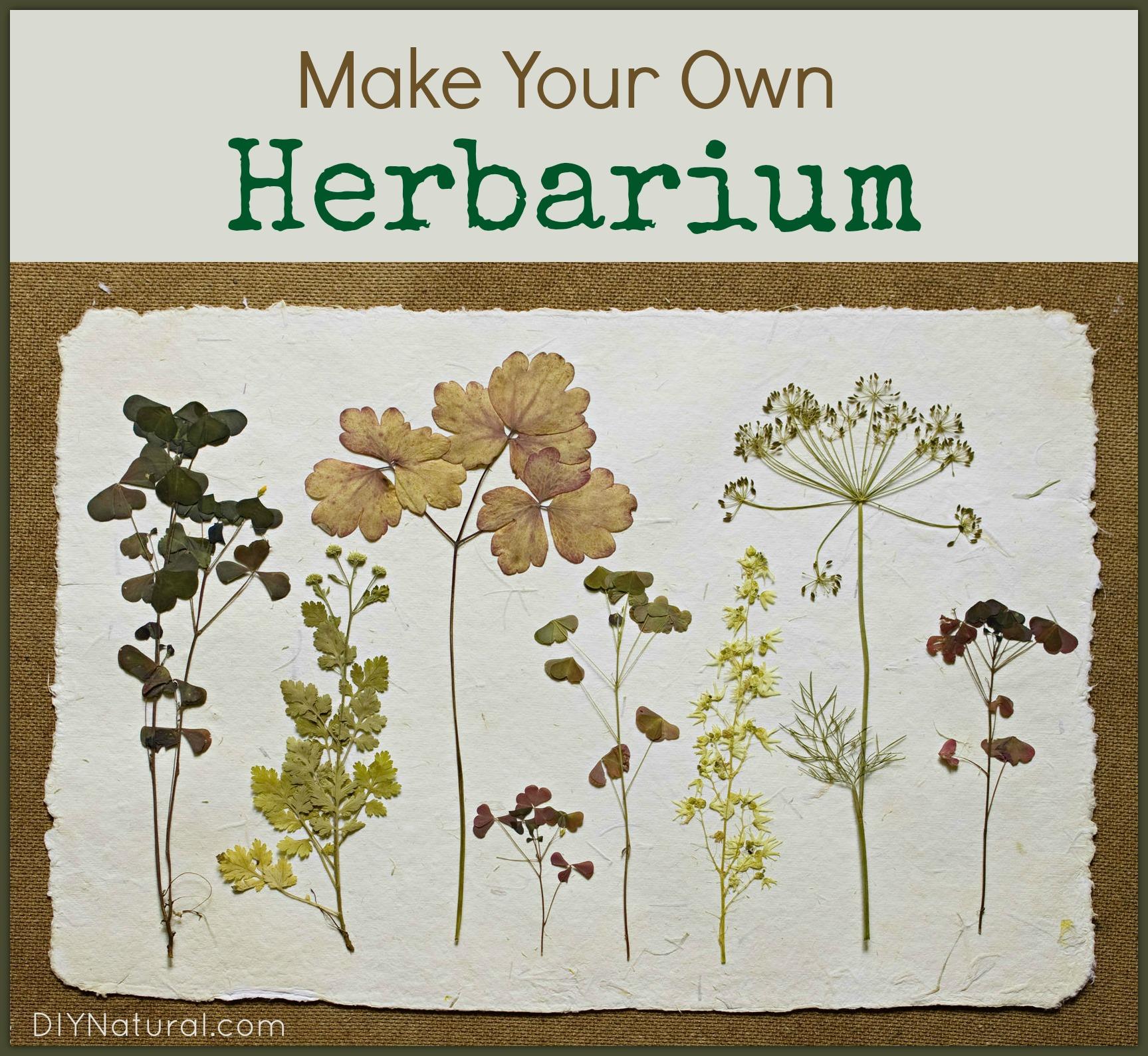 Make Your Own Herbarium Identification Book