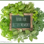 Herbs for Memory: Rosemary Sage Ginkgo & Others!