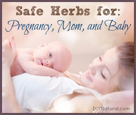 Herbs For Pregnancy