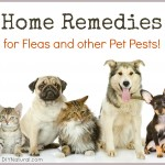 Home Remedies for Fleas (and other pests) On Pets