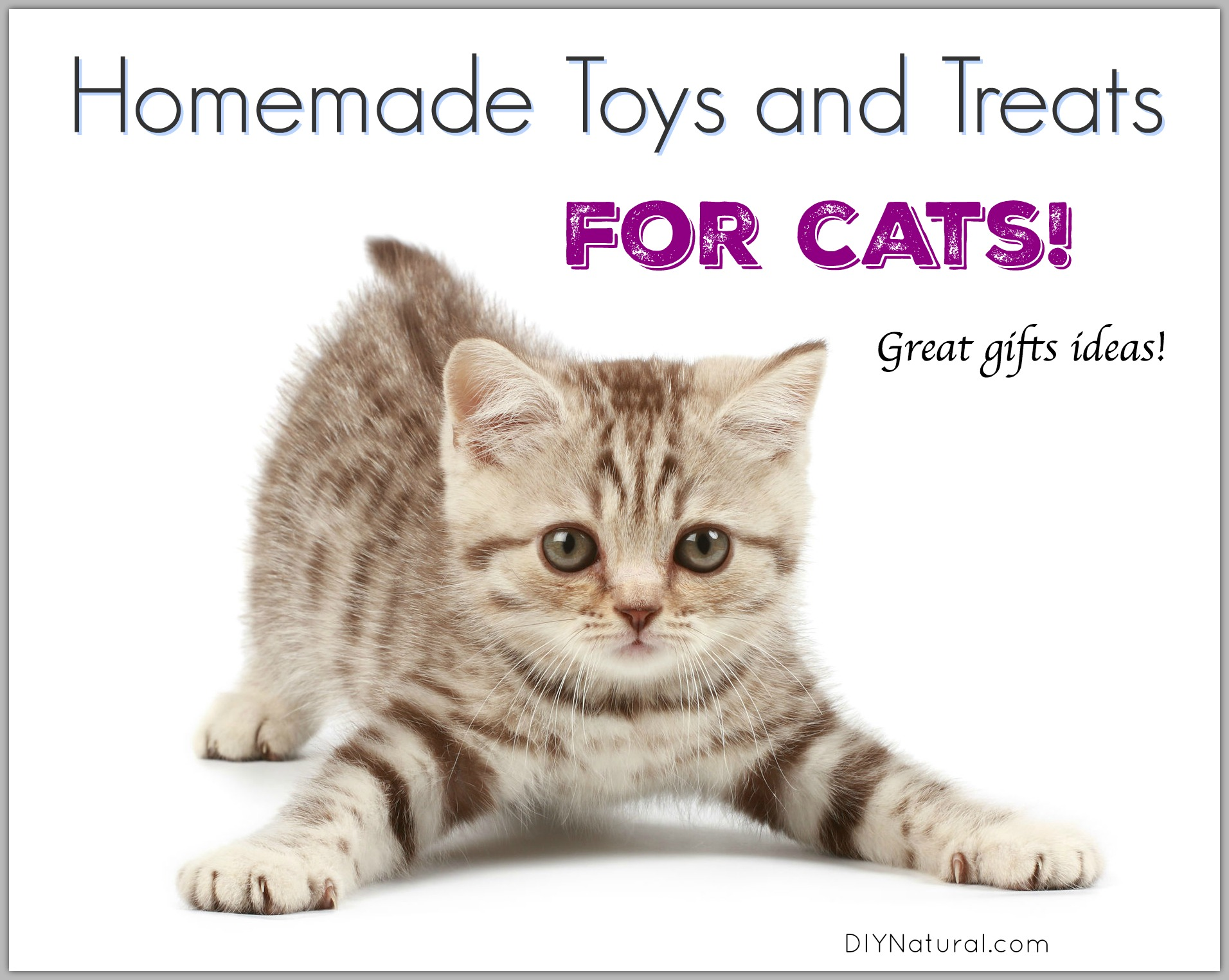 Homemade Cat Toys and Treats for Your Precious Kitty Cats