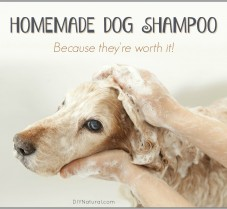 A Homemade and Natural Dog Shampoo Bar Recipe