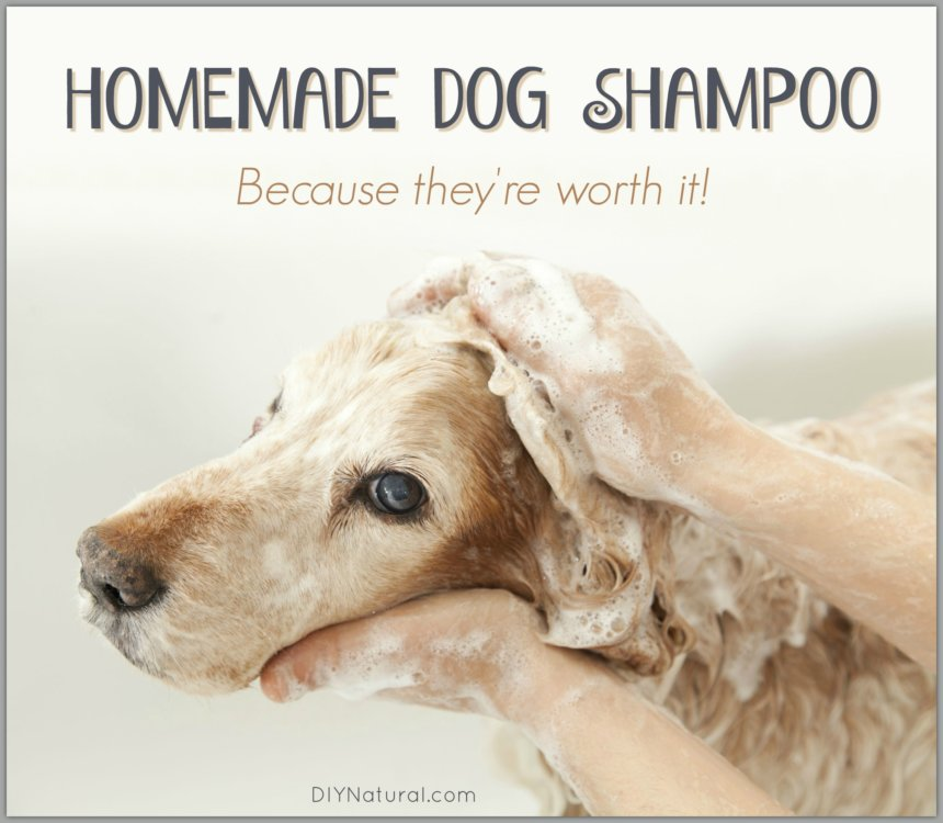 Homemade Dog Shampoo Bar: A Simple and
