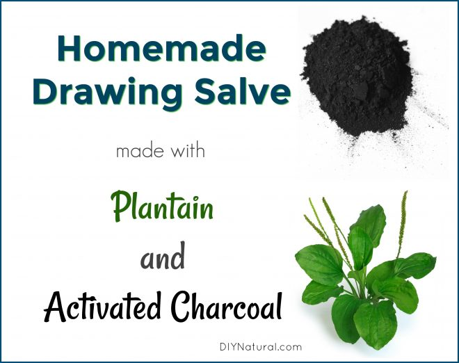 Homemade Drawing Salve Plantain Activated Charcoal