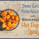 Homemade Hot Pepper Spray for Organic Gardening