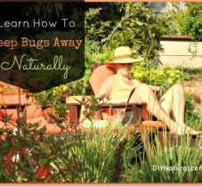 Learn How to Keep Bugs Away Naturally