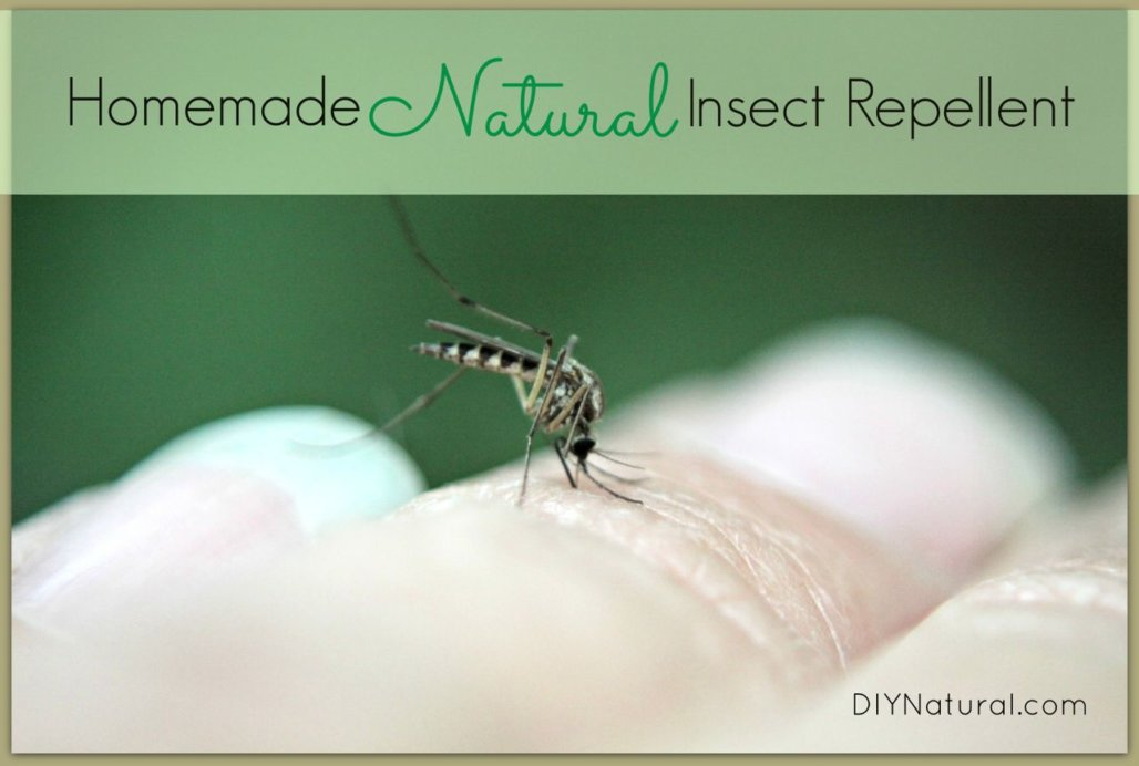 Homemade Mosquito Repellent Spray