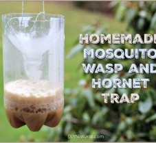 Learn To Make Mosquito, Wasp, and Hornet Traps