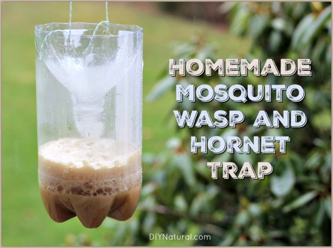 how to make a homemade house fly trap