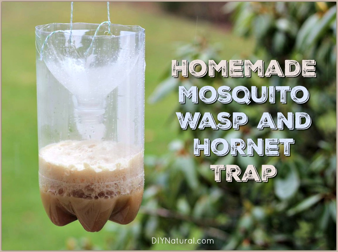 Homemade Mosquito Traps and Homemade Wasp Traps