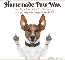 Homemade All Natural Paw Wax/Balm For Dogs