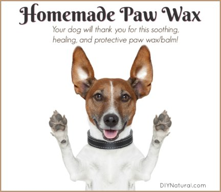 Homemade Paw Wax Balm Dog
