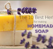 The 10 Best Herbs to Use in Your Homemade Soaps