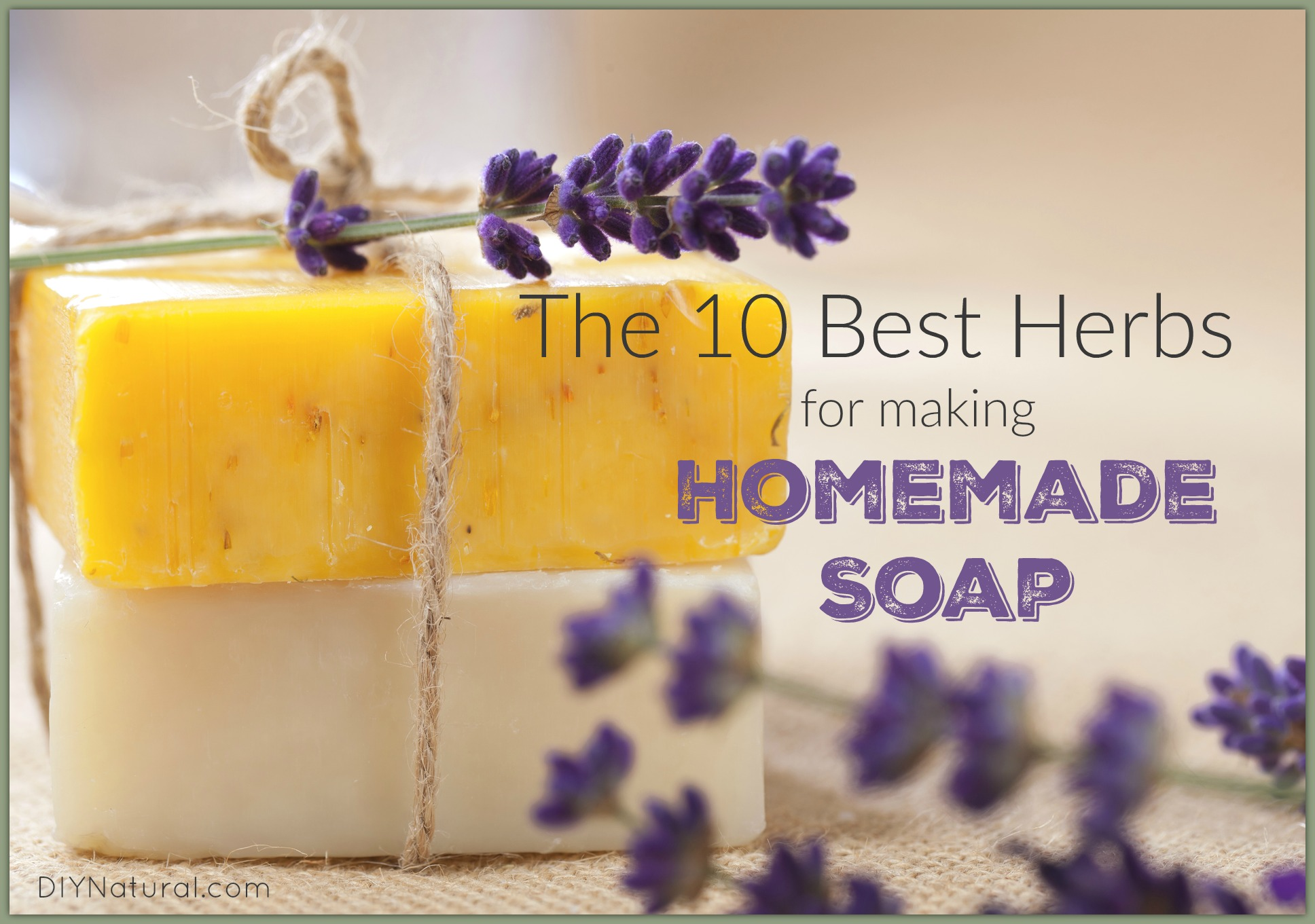 Homemade soap the best herbs to use in your recipes - Homemade scent recipes ...