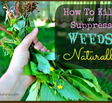 How to Kill and Control Weeds Naturally