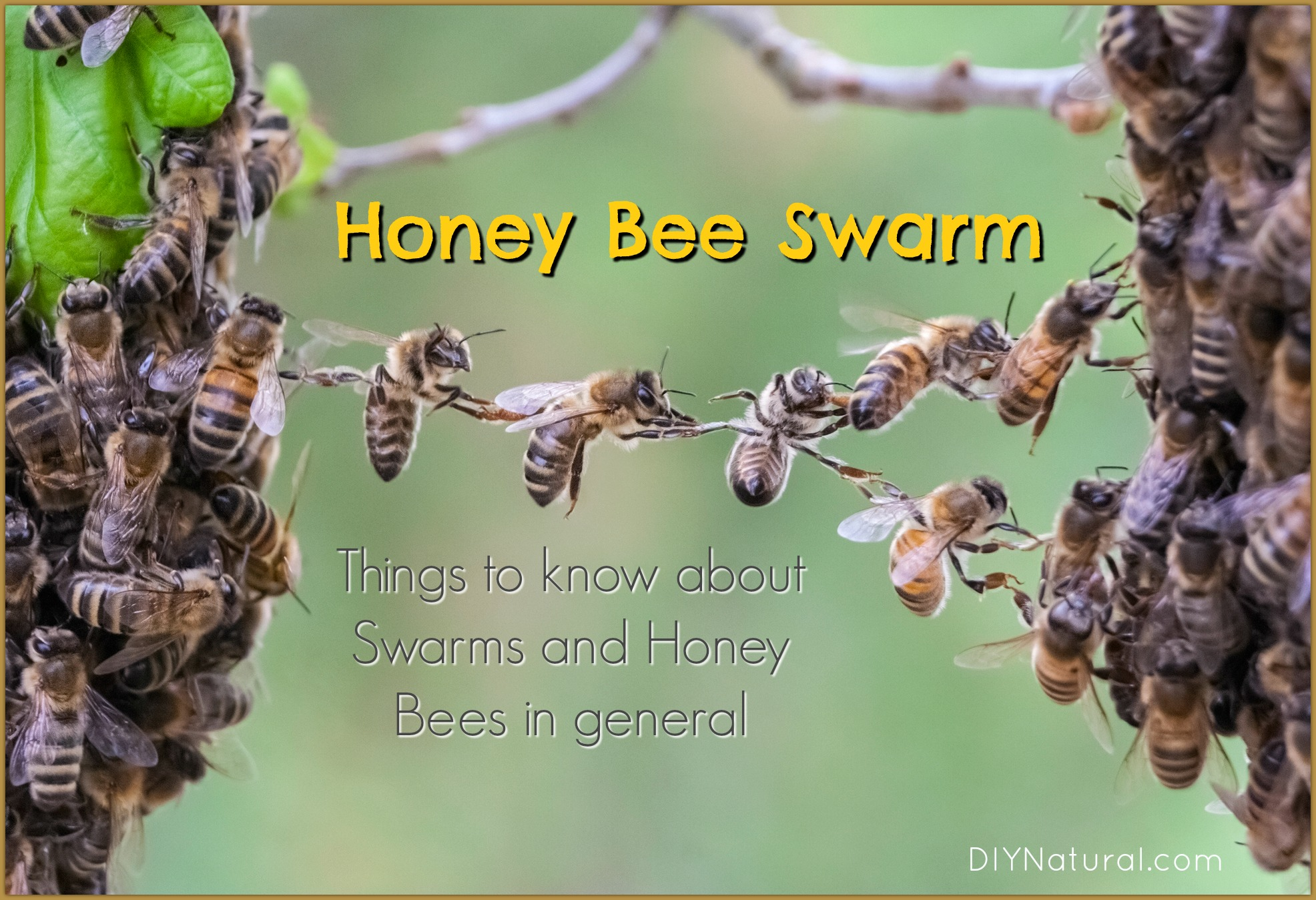 bee swarm things to know about honey bee swarms