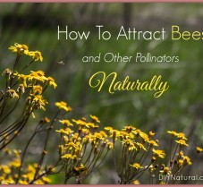 Learn How to Attract Pollinators Naturally