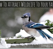 Naturally Attract Birds and Wildlife To Your Yard