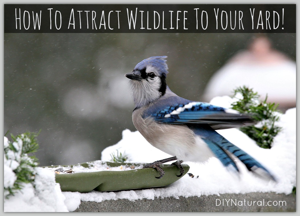 how to attract birds and wildlife to your yard