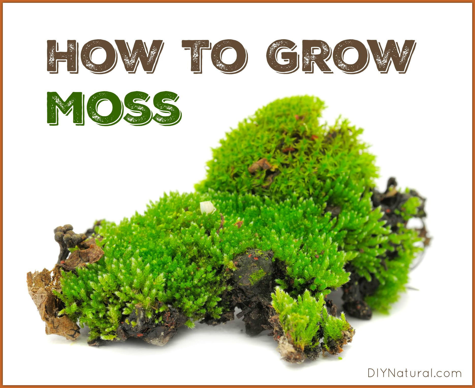 How To Grow Moss A Simple And Fun Project