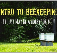 An Intro to Beekeeping To See If It's a Hobby For You