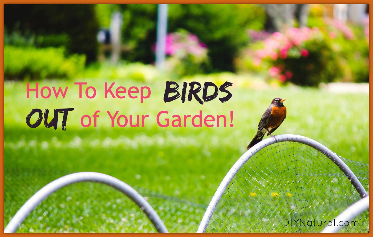 how to keep birds out of your garden