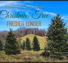 Eight Steps for Keeping Your Christmas Tree Fresh