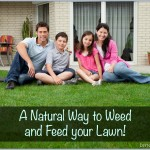 The Natural Way To Weed and Feed Your Lawn