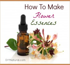 How to Make and Use Your Own Flower Essences