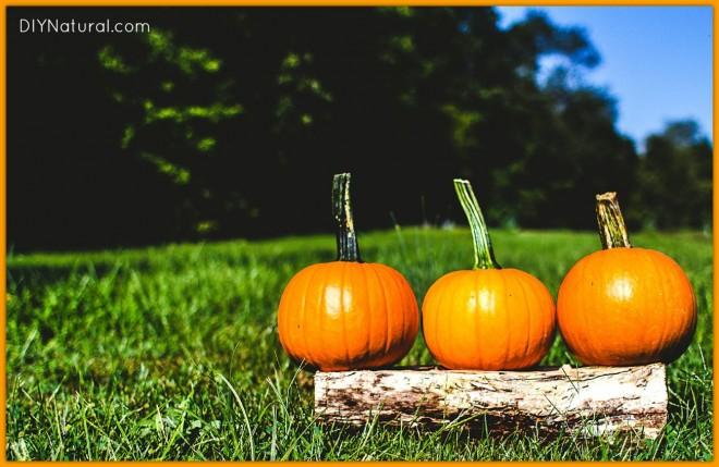 How To Make Pumpkin Puree 1