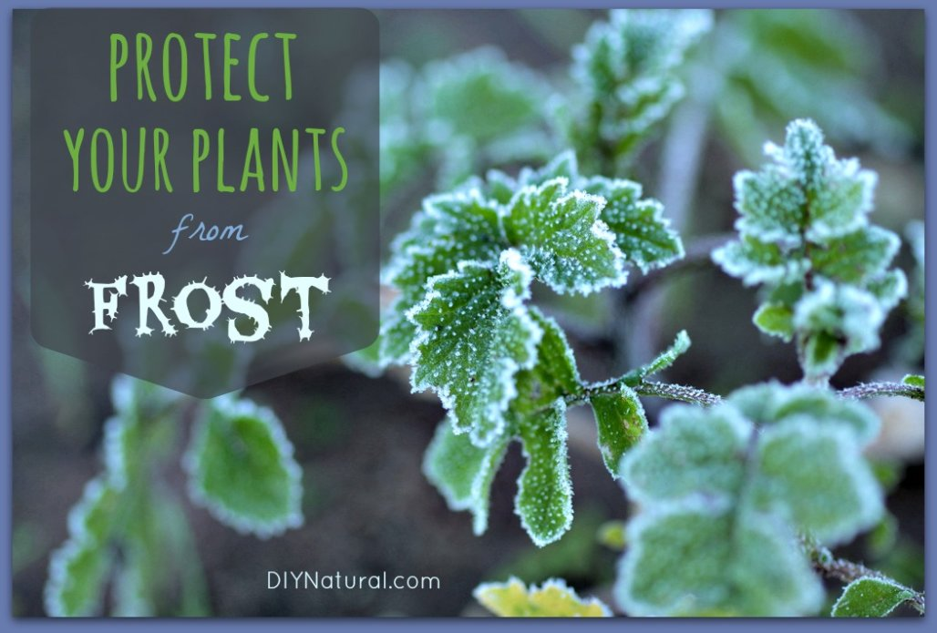 How To Protect From Frost