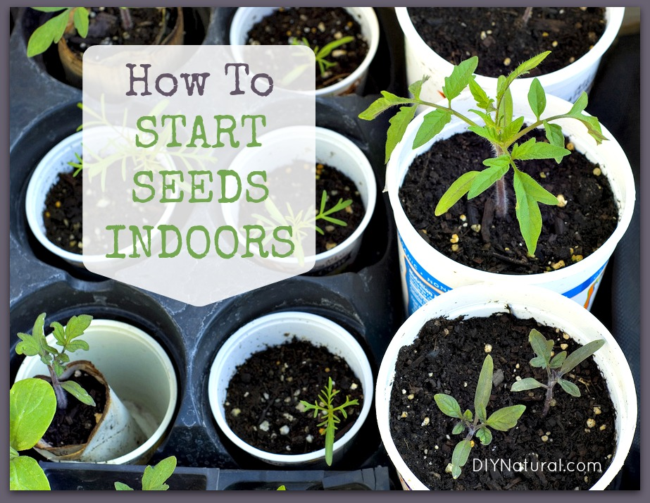 How To Start Seeds Tips For Growing Indoors,Pantone Color Of The Year 2019 Clothing