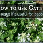 My Three Favorite Ways to Use Catnip on Humans