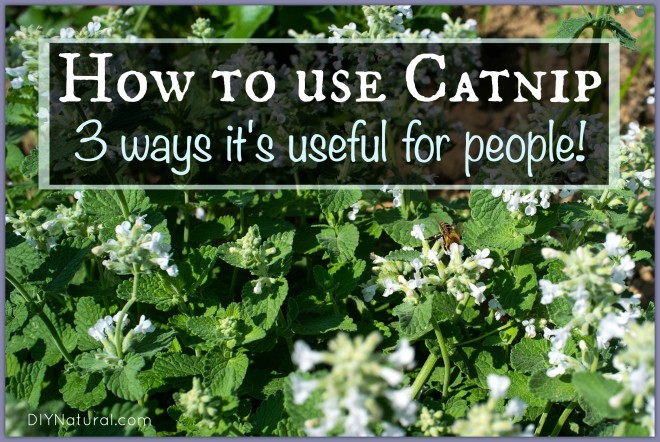 How To Use Catnip