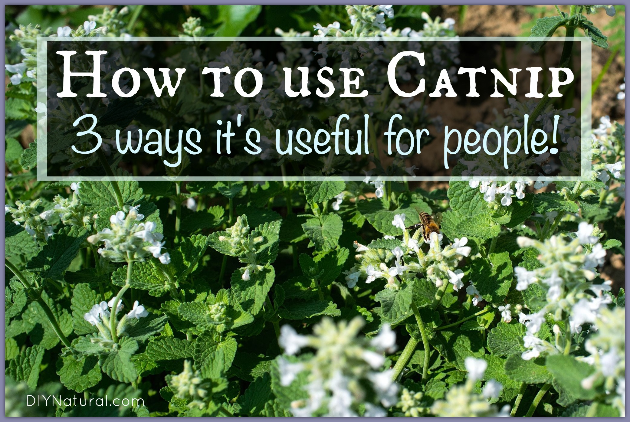 How To Use Catnip On Humans