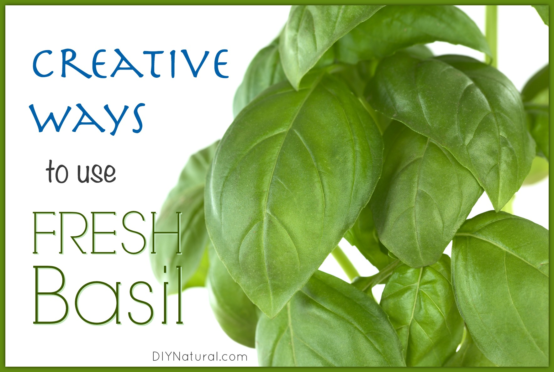 How To Use Fresh Basil in 4 Surprising Ways