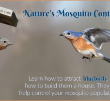 How And Why To Attract Bluebirds To Your Garden