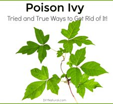 Tried and True Poison Ivy Solutions That Work