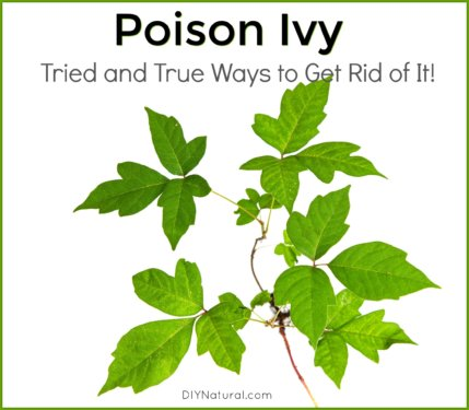 How to Get Rid of Poison Ivy