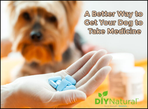 How to Get a Dog to Take a Pill