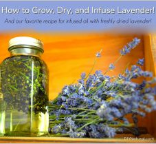 How to Grow, Dry & Use Lavender for Home & Beauty