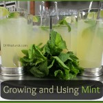 Mint Condition – Grow and Use All Types of Mint!
