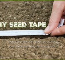 DIY Seed Tape: Learn to Make Seed Tape at Home