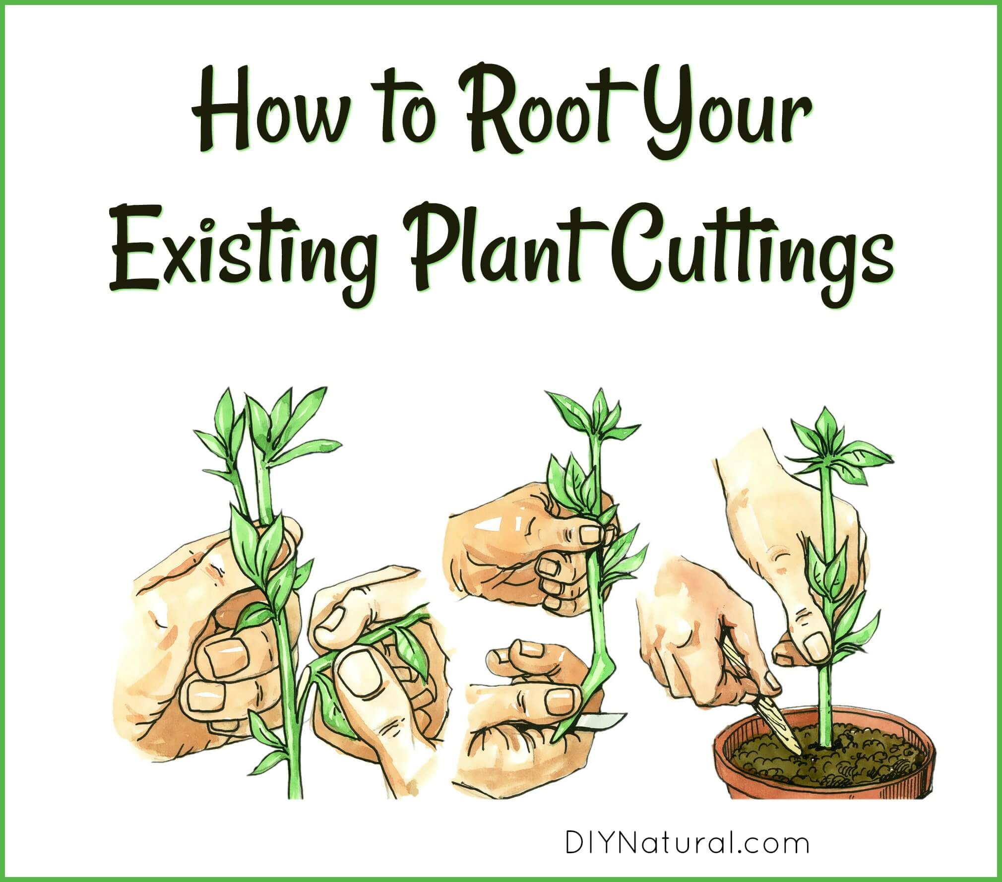 How to store cuttings
