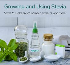 Learn to Grow, Make, and Use DIY Stevia Sweetener
