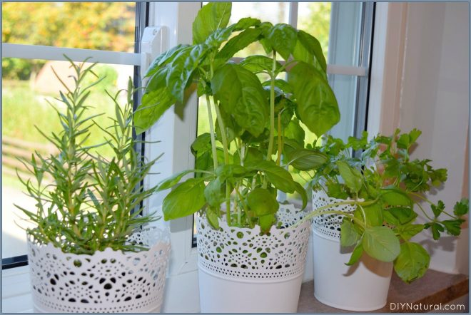 Indoor Herb Garden 1