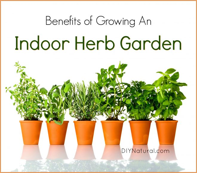 5 Reasons You Should Be Growing Herbs Indoors